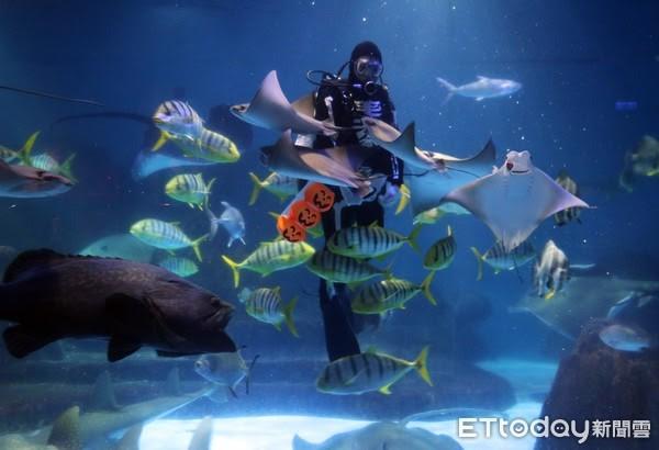 水中世界也有萬聖節相關活動